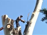 В Сухуме продолжается благоустройство парков и скверов (видео)