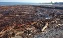 Руслан Авидзба: очистку сухумских пляжей завершат в течение двух дней